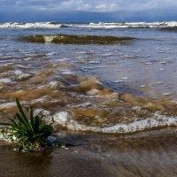 бурление моря :: Георгий А