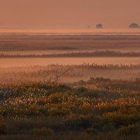 Осенняя фотоэкспедиция по Астраханскому заповеднику :: Фёдор. Лашков