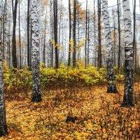 поздняя осень :: Горкун Ольга Николаевна