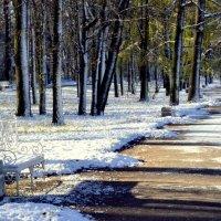 В парке, выпал первый снег 15 :: Сергей
