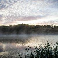 Туманным утром :: лиана алексеева