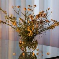 Полевые цветы :: Наталья Кузнецова
