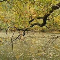 Осень в Трикратском лесу :: Татьяна Ларионова