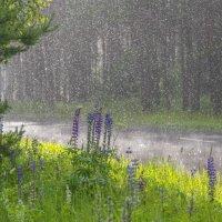 Летний дождь :: Вячеслав Побединский