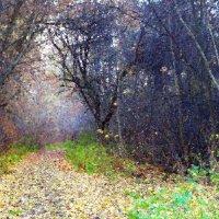 Лесная дорога :: Елена Макарова