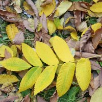 Осенний этюд-2. Листья под ногами... :: Елена Викторова