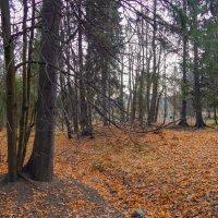 Вечер в Шуваловском парке. :: Лариса (Phinikia) Двойникова