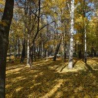 Осень в парке :: Григорий Вагун*