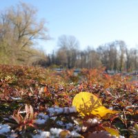 Осенние листья :: Елена