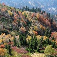 Тропинка в Осень :: Марина Лукина