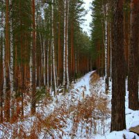 Таватуйский лес :: Нэля Лысенко