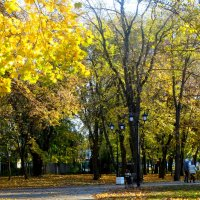 Ноябрь,прогулка в парке... :: Тамара (st.tamara)