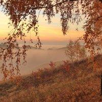 Золотая березка на рассвете :: Евгений (bugay) Суетинов