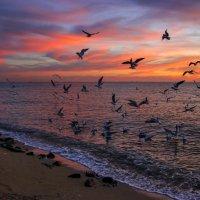 И вновь чарующий закат :: Нилла Шарафан