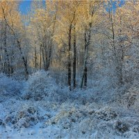 Утро в лесу :: Александр Алексеенко