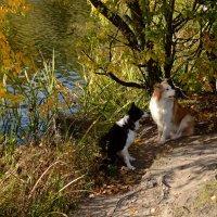 Собачья фотосессия на фоне осени :: Ольга Русанова (olg-rusanowa2010)
