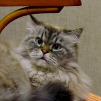 Не сгоняй меня со стула! :: Сергей Карачин