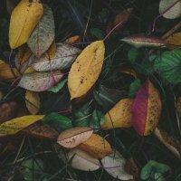 Осень :: Евгений Шанцев
