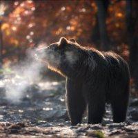 Winter Is Coming .. :: Влад Соколовский