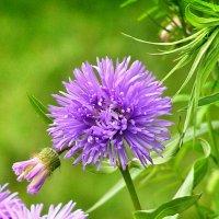 цветок :: Сергей Беличев