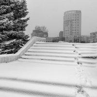 Снежное покрывало :: Валерий Михмель