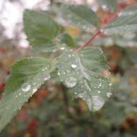 Капли осеннего дождя :: Алексей Кузнецов