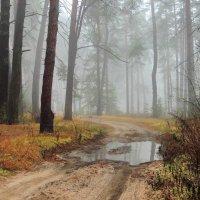 И невесомее души тумана грусть... :: Лесо-Вед (Баранов)