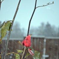 А снег идет.... (январь, -25...) :: Татьяна Ларионова