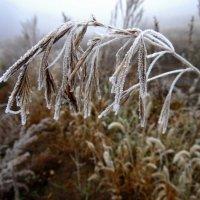 Дыхание зимы. :: nadyasilyuk Вознюк