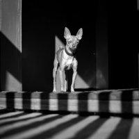 Осторожно, злая собака :: Михаил Кузнецов