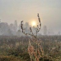 Осенний рассвет :: Константин Поляков