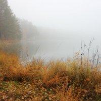 Осенний туман на озере Карась :: Ната Волга