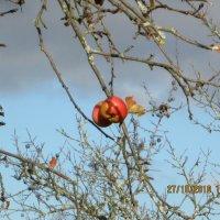 Поздние яблочки :: Антон Завьялов