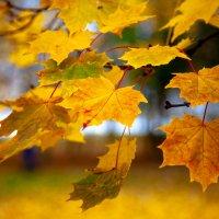 Осень в парке :: Олег Денисов