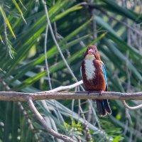 Kingfisher :: Oleg