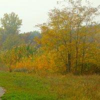 Осенние картинки... :: Тамара (st.tamara)