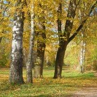 """""""Такую осень я люблю: В лесу палитра красок ярких..."""" :: Galina Dzubina"""