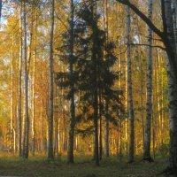 в осеннем лесу :: Елена