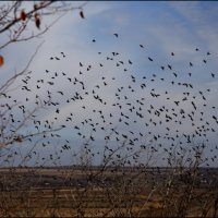 Птицы :: Владимир Стаценко