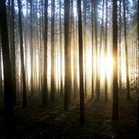 Утро в лесу. :: Sergii Ruban