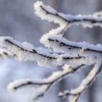 В снежной шубке :: Светлана marokkanka