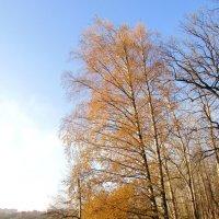 Осень в парке :: Андрей Снегерёв