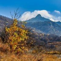 Осень на Кавказе :: Николай Николенко