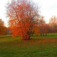 Роняет осень свой наряд :: Вера