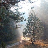 Солнечные лучики :: Владимир Зеленцов