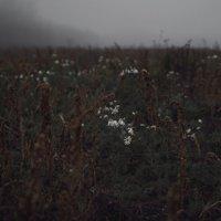 Последние цветы :: Илья Попов