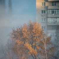 Город осень :: Vano Shumeiko