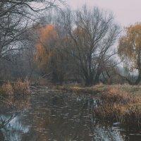 осенняя река :: Алина Гриб