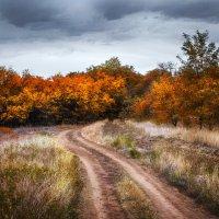 И снова Осень.... :: Александр Афромеев