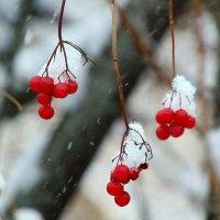 А снег идёт. :: nadyasilyuk Вознюк
